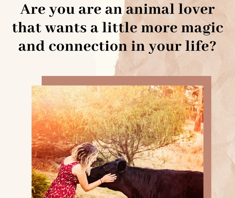 What is an Animal Communicator and How can they Help You?